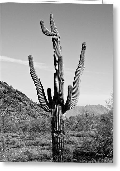 Mountain Valley Pyrography Greeting Cards - Ragged Cactus Greeting Card by Chip Joiner
