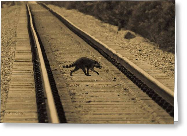 Hobo Greeting Cards - Railroad Bandit Greeting Card by DigiArt Diaries by Vicky B Fuller
