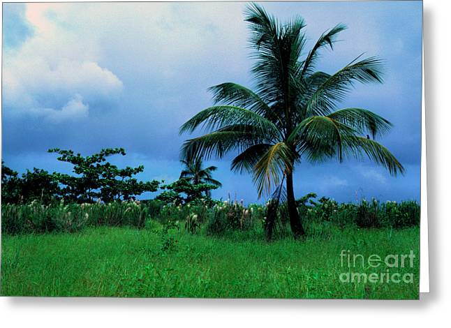1987 Greeting Cards - Rain Cloudsover Dominica Greeting Card by Thomas R Fletcher