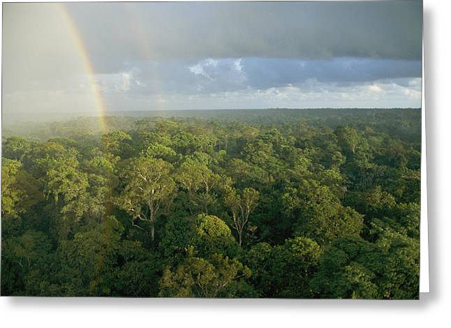 Forests And Forestry Greeting Cards - Rain Forest Canopy With Rainbow Greeting Card by Darlyne A. Murawski