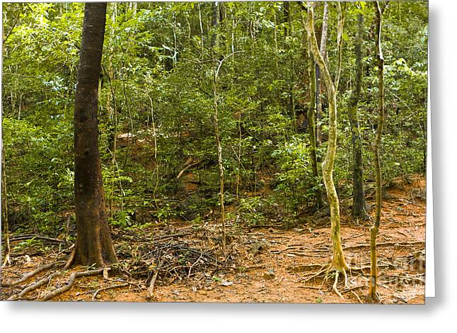 Malaysia Greeting Cards - Rain Forest Greeting Card by John Buxton