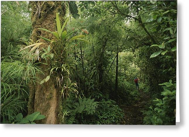 Bromeliad Greeting Cards - Rain Forest Tree With Bromeliad Plants Greeting Card by Michael Melford
