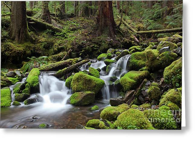 Olympic National Park Greeting Cards - Rain Forest Waterfall Greeting Card by Keith Kapple