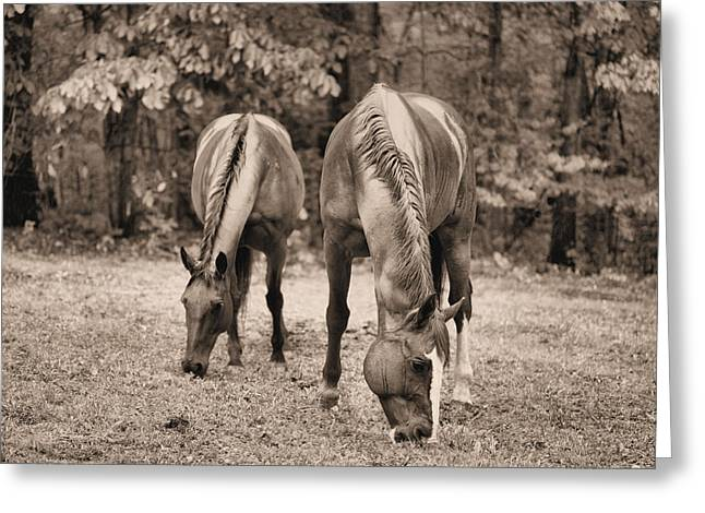 Rain In Horse Country Greeting Card by JC Findley