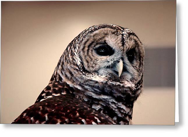 Owl Greeting Cards - Rain Owl Greeting Card by LeeAnn McLaneGoetz McLaneGoetzStudioLLCcom