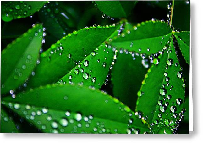 Rain Droplet Photographs Greeting Cards - Rain patterns Greeting Card by Toni Hopper