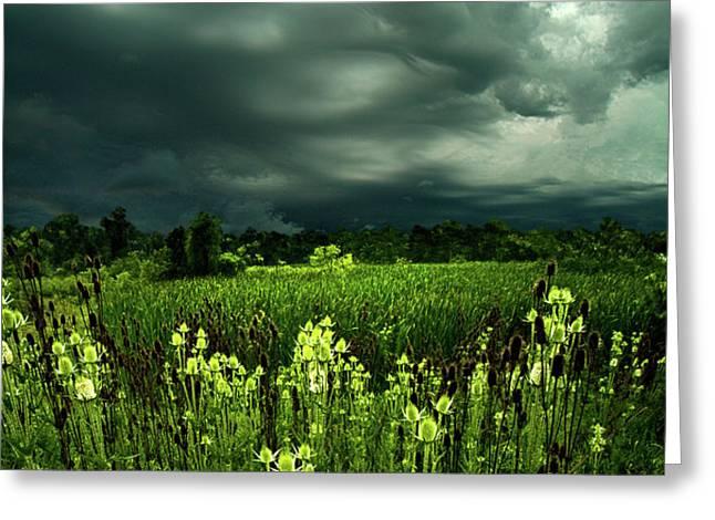 Rain Greeting Card by Phil Koch