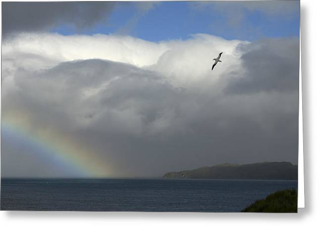 Sea Birds Greeting Cards - Rainbow And Wandering Albatross, Prion Greeting Card by Ralph Lee Hopkins