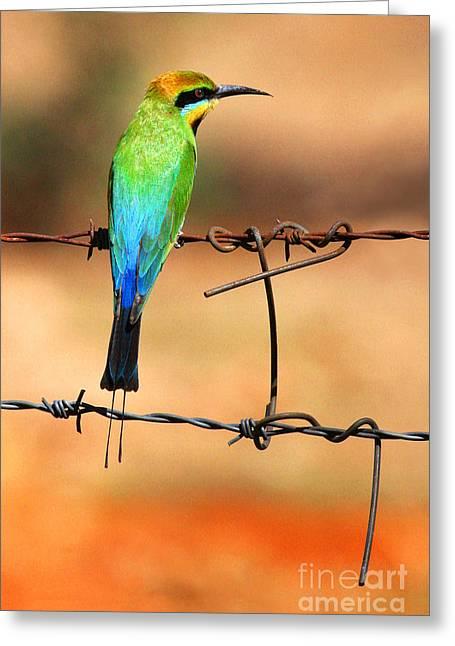 Rainbow Bee-eater Greeting Card by Brian Gunter