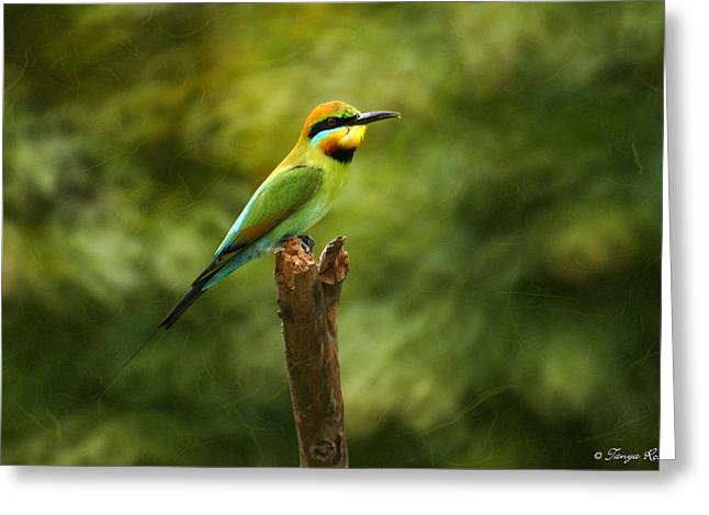 Australian Bees Greeting Cards - Rainbow Bee-eater Greeting Card by Tanya Rossi