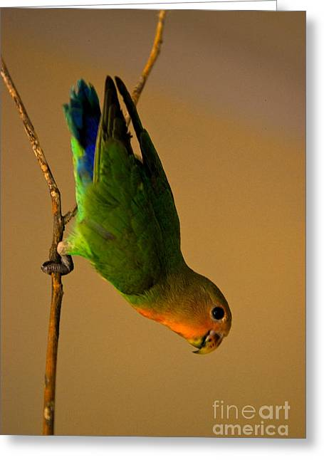 Best Selling Bird Art Greeting Cards - Rainbow Bird Greeting Card by Syed Aqueel