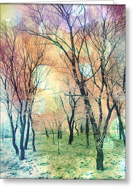 Pink Black Tree Rainbow Photographs Greeting Cards - Rainbow Forest Greeting Card by Marianna Mills