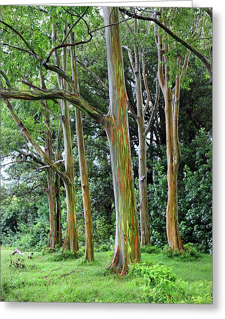 Paradise Road Greeting Cards - Rainbow forest Greeting Card by Pierre Leclerc Photography