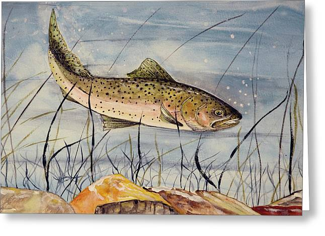 Rainbow Trout Greeting Cards - Rainbow In Search Greeting Card by Linda Palmer