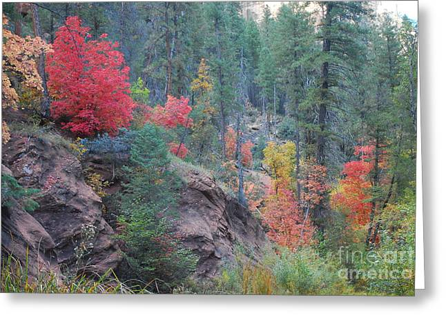 West Fork Greeting Cards - Rainbow of the Season Greeting Card by Heather Kirk
