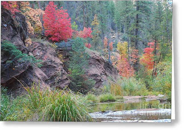 Heather Kirk Greeting Cards - Rainbow of the Season with River Greeting Card by Heather Kirk