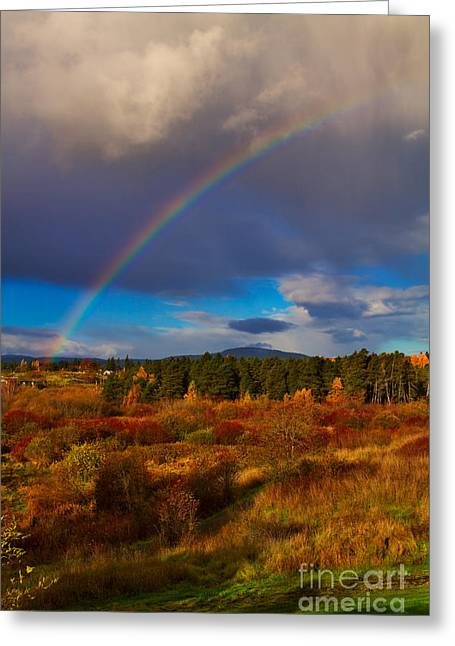 Rainbow Over Rithets Bog Greeting Card by Louise Heusinkveld