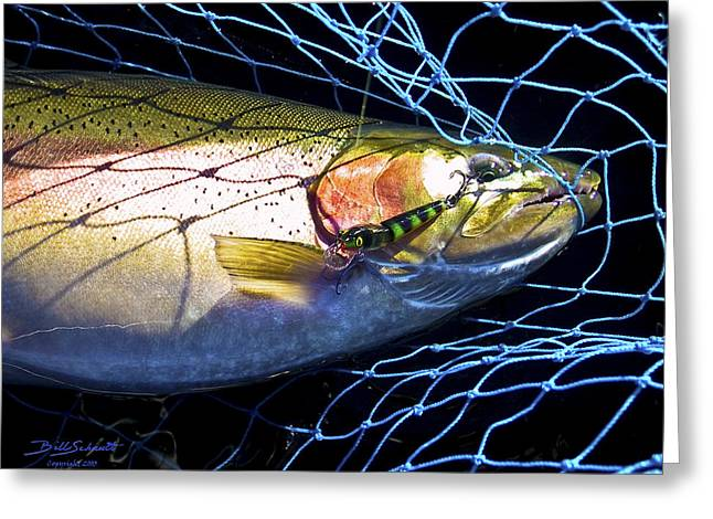 Rainbow Trout Greeting Cards - Rainbow Trout Greeting Card by Bill Schaudt