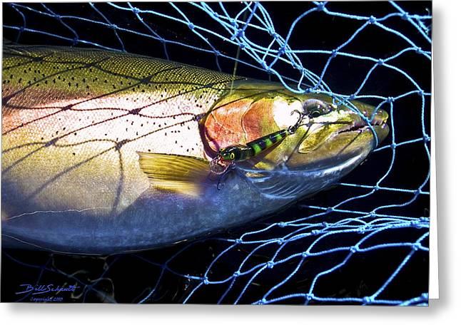 Rainbow Trout Greeting Card by Bill Schaudt