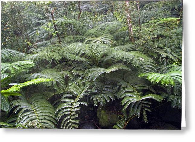 Manoa Falls Greeting Cards - Raindrops Collect On Ferns Greeting Card by Stacy Gold