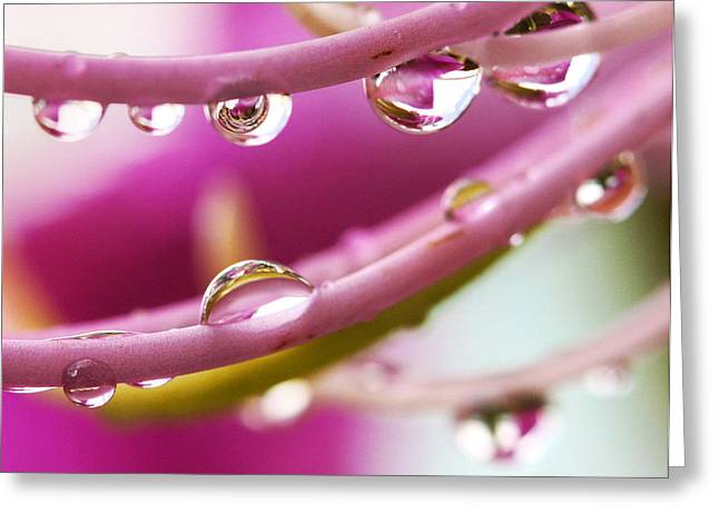 Nobilis Greeting Cards - Raindrops Greeting Card by Marilyn Hunt