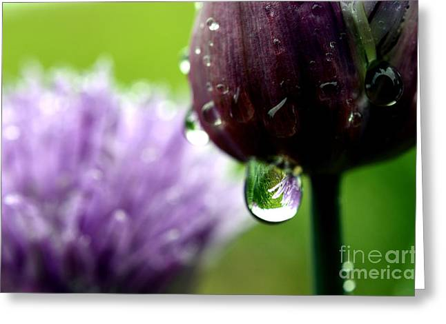 Raindrops On Chives In Bloom Greeting Card by Thomas R Fletcher