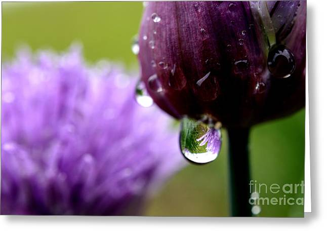 Green Chives Greeting Cards - Raindrops on Chives Greeting Card by Thomas R Fletcher