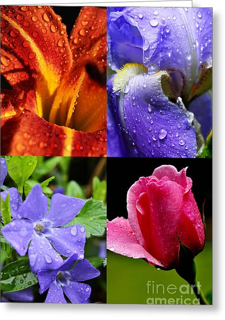 Vinca Greeting Cards - Raindrops on Flowers Four in One Image Greeting Card by Thomas R Fletcher
