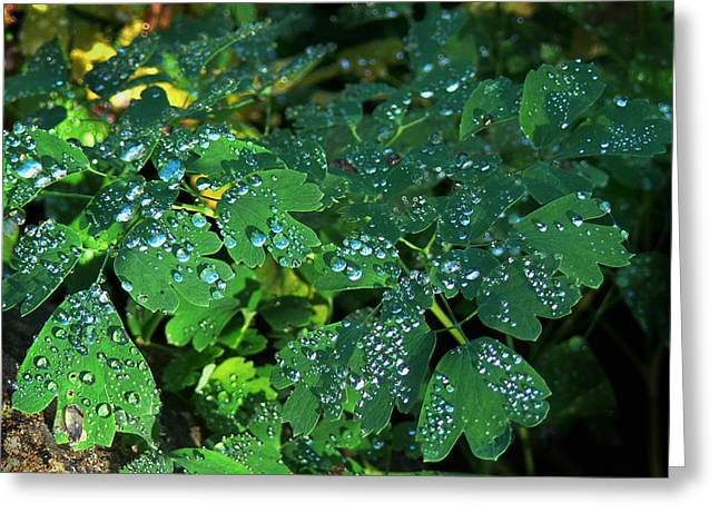Raindrops On Leaves Greeting Cards - Raindrops on Leaves Greeting Card by Danna Lynn Cruzan
