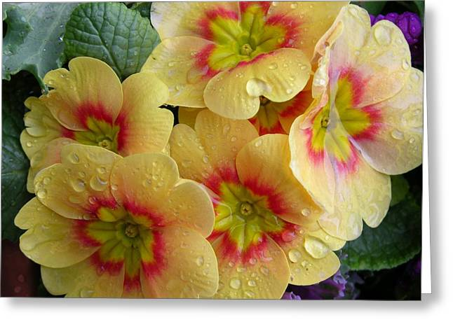 Carol Groenen Greeting Cards - Raindrops on Yellow Flowers Greeting Card by Carol Groenen