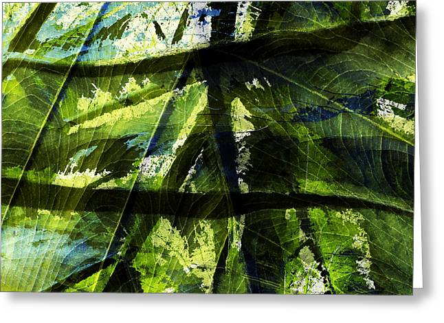 Mixed Media Photo Greeting Cards - Rainforest Abstract Greeting Card by Bonnie Bruno