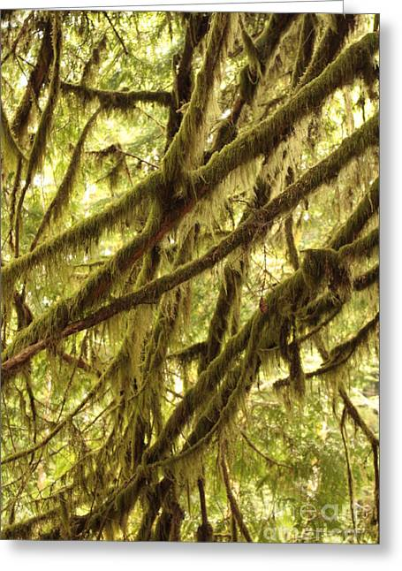 Moss Green Greeting Cards - Rainforest Drama Greeting Card by Carol Groenen