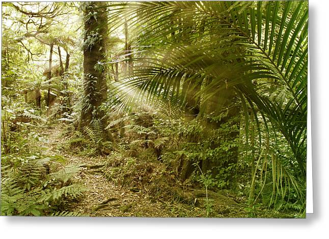 Daytime Greeting Cards - Rainforest Greeting Card by Les Cunliffe