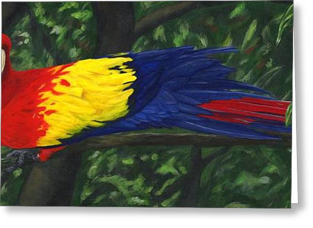 Scarlet Macaw Greeting Cards - Rainforest Parrot Greeting Card by JoAnn Wheeler