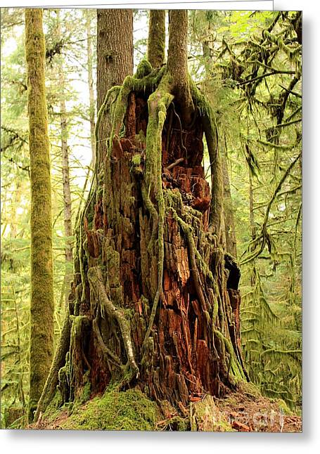 """strange Trees"" Greeting Cards - Rainforest Rejuvenation Greeting Card by Carol Groenen"