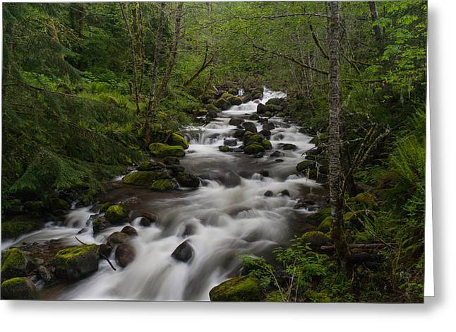 Rainier Forest Flow Greeting Card by Mike Reid