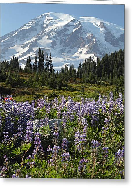 Paradise Meadow Greeting Cards - Rainier Wild flowers Greeting Card by Pierre Leclerc Photography