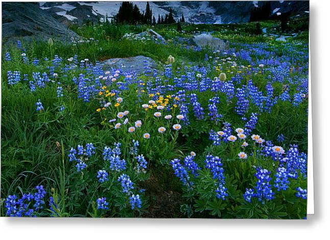 Rainier Wildflower Dawn Greeting Card by Mike  Dawson