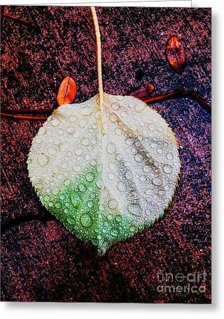 Jill Hyland Greeting Cards - Rainy Day Greeting Card by Jill Hyland