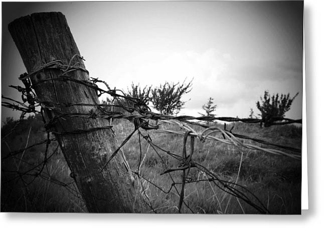 Barbed Wire Fences Greeting Cards - Ramble On Greeting Card by Jerry Cordeiro