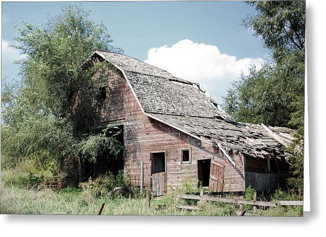 Amish Greeting Cards - Ramshackle  Greeting Card by Jame Hayes