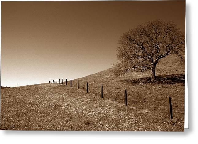Ranch Road Oak Greeting Card by Kathy Yates