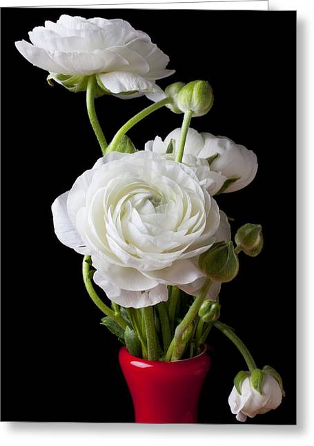 White Florals Greeting Cards - Ranunculus In Red Vase Greeting Card by Garry Gay