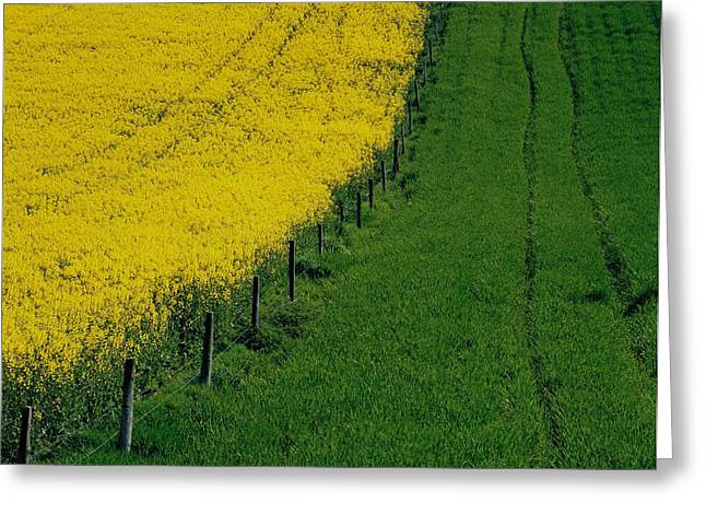 The Agricultural Life Greeting Cards - Rapeseed Growing In A Field, Ireland Greeting Card by The Irish Image Collection