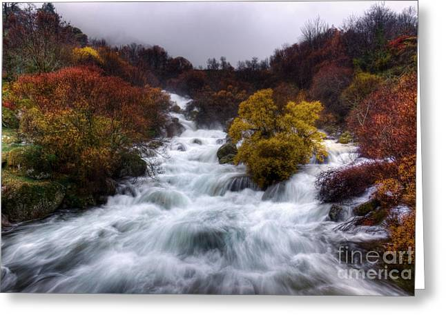 Autumn Scenes Greeting Cards - Rapid Waters Greeting Card by Carlos Caetano