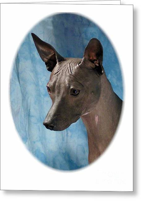 Dogs Digital Greeting Cards - Rat Terrier 296 Greeting Card by Larry Matthews