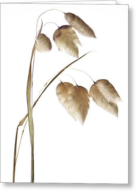 Rectangles Greeting Cards - Rattlesnake Grass Number 1 Greeting Card by Carol Leigh