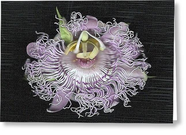 Passionflower Greeting Cards - Raw Passion Greeting Card by Mary Ann Southern