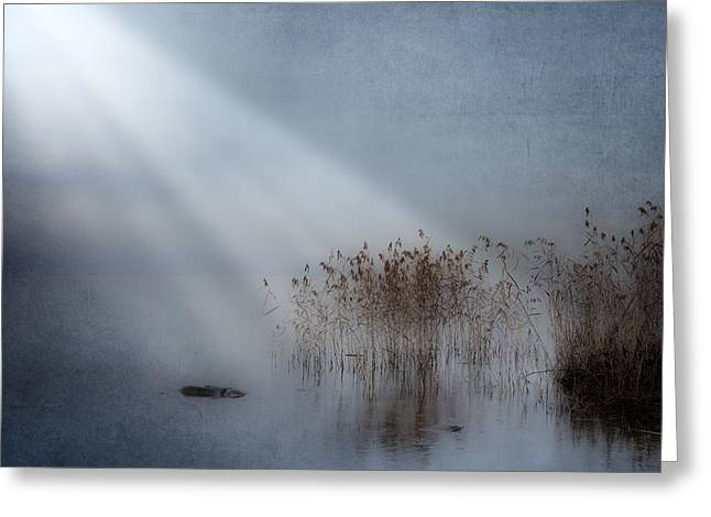 rays of light Greeting Card by Joana Kruse