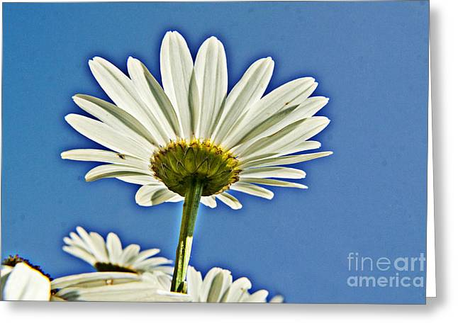 Reach For The Blue Sky Greeting Card by Darleen Stry